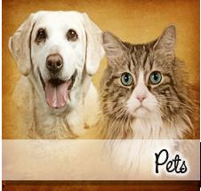 pets-box